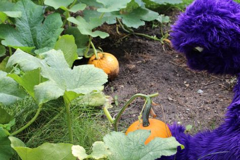 Its a pumpkin patch and apple picking kind of weekend.